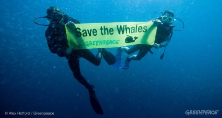 SaveTheWhales-01-copy